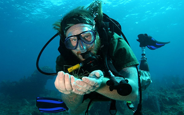 diver with arrowhead crab
